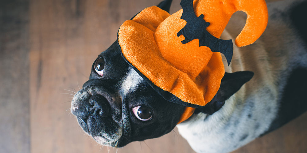 harbourside-place-howl-o-ween-pet-costume-contest